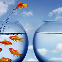 Goldfish jumping from one fishbowl to another representing culture change